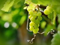 Quelles sont les différentes solutions pour s'initier au vin?