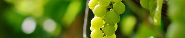 grapes-2673874_960_720